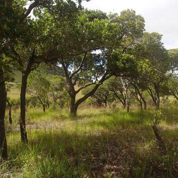 Les 10 communautés à Ambatofinandrahana a développé un plan de restauration pour sauver la forêt de Tapia
